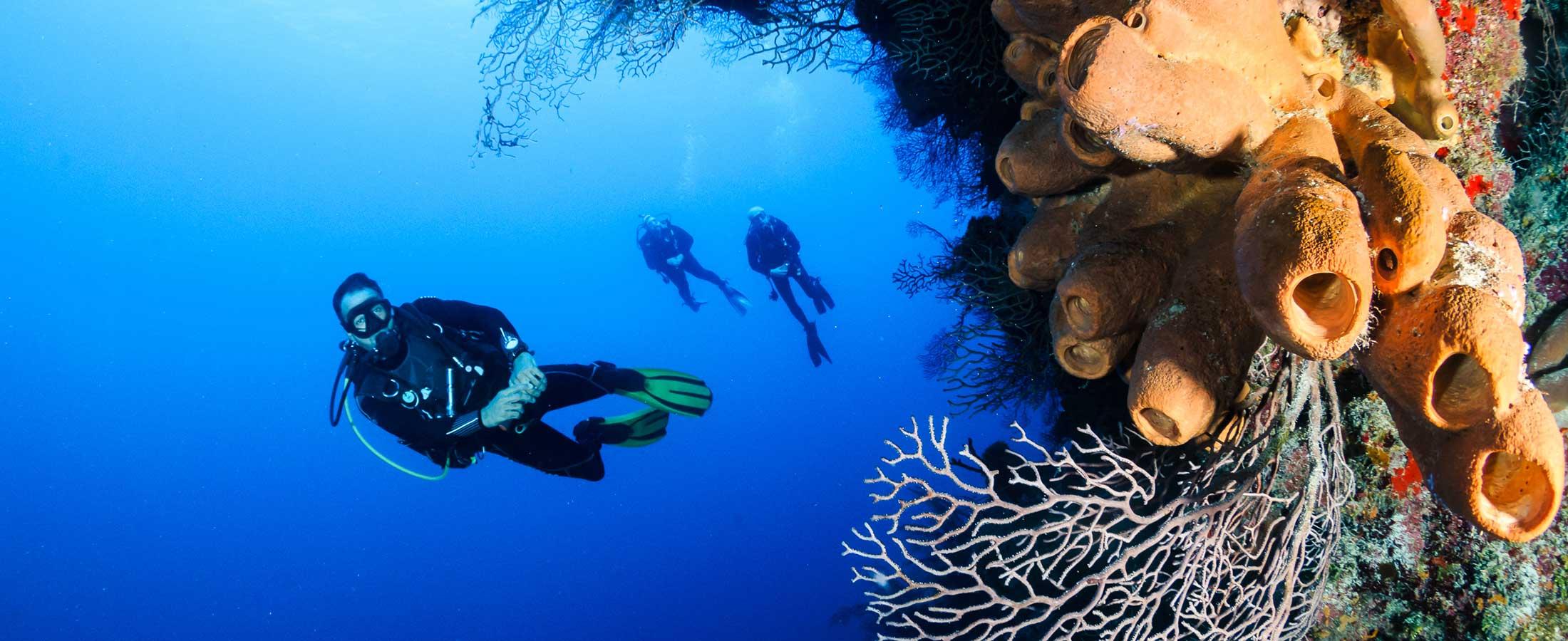 RRI Wall dive site