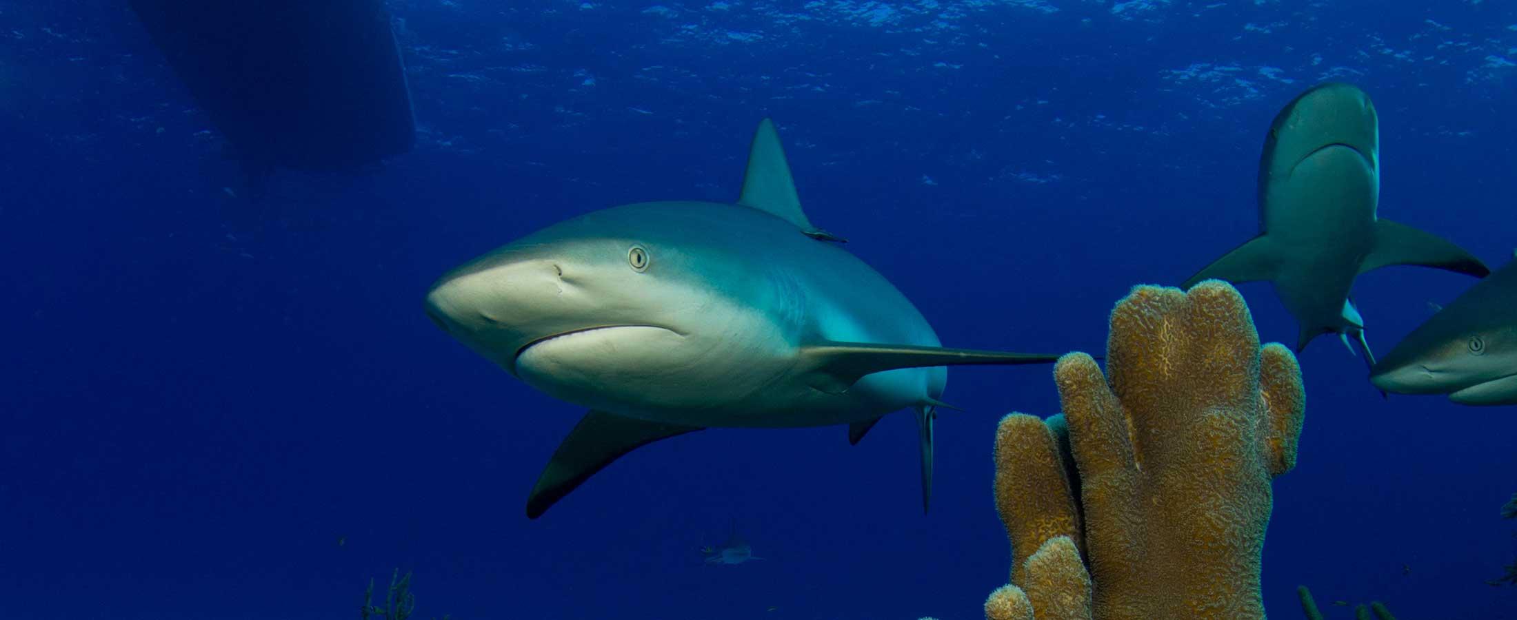 san salvador dive sites, diving in san salvador bahamas