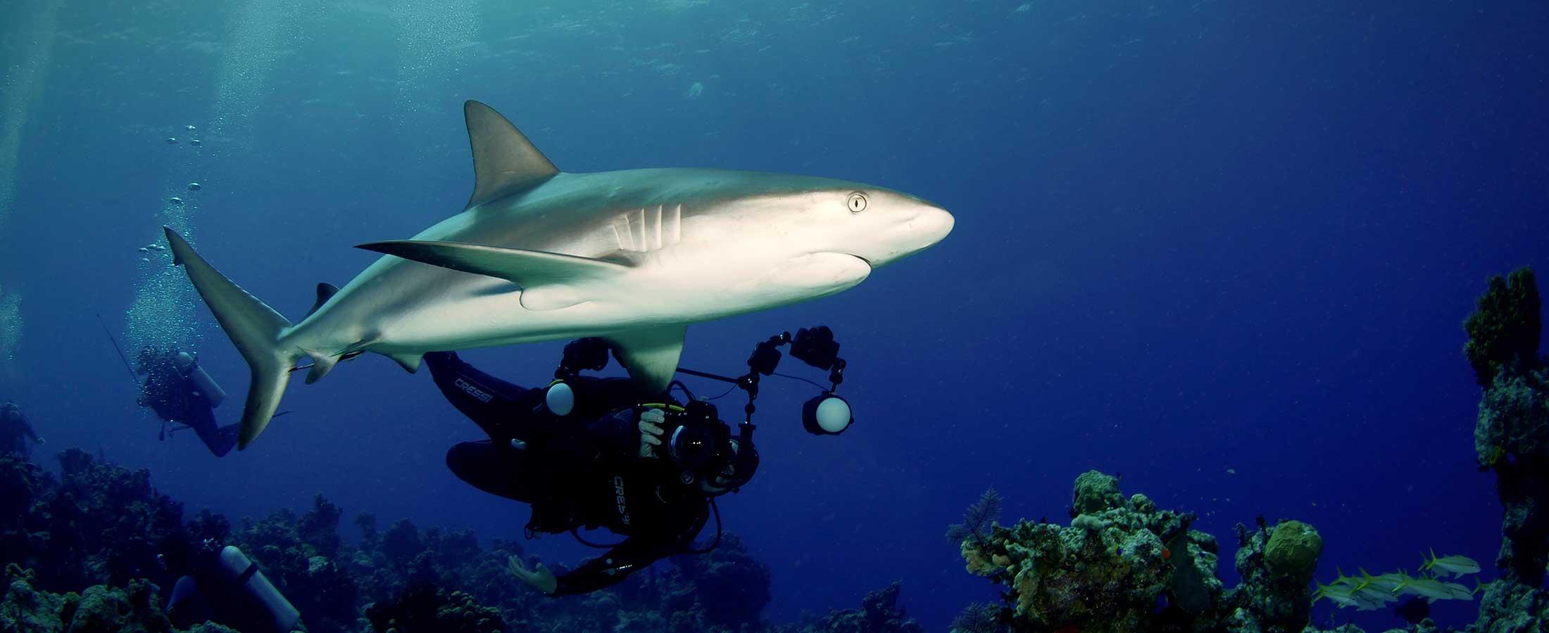 shark alley dive site