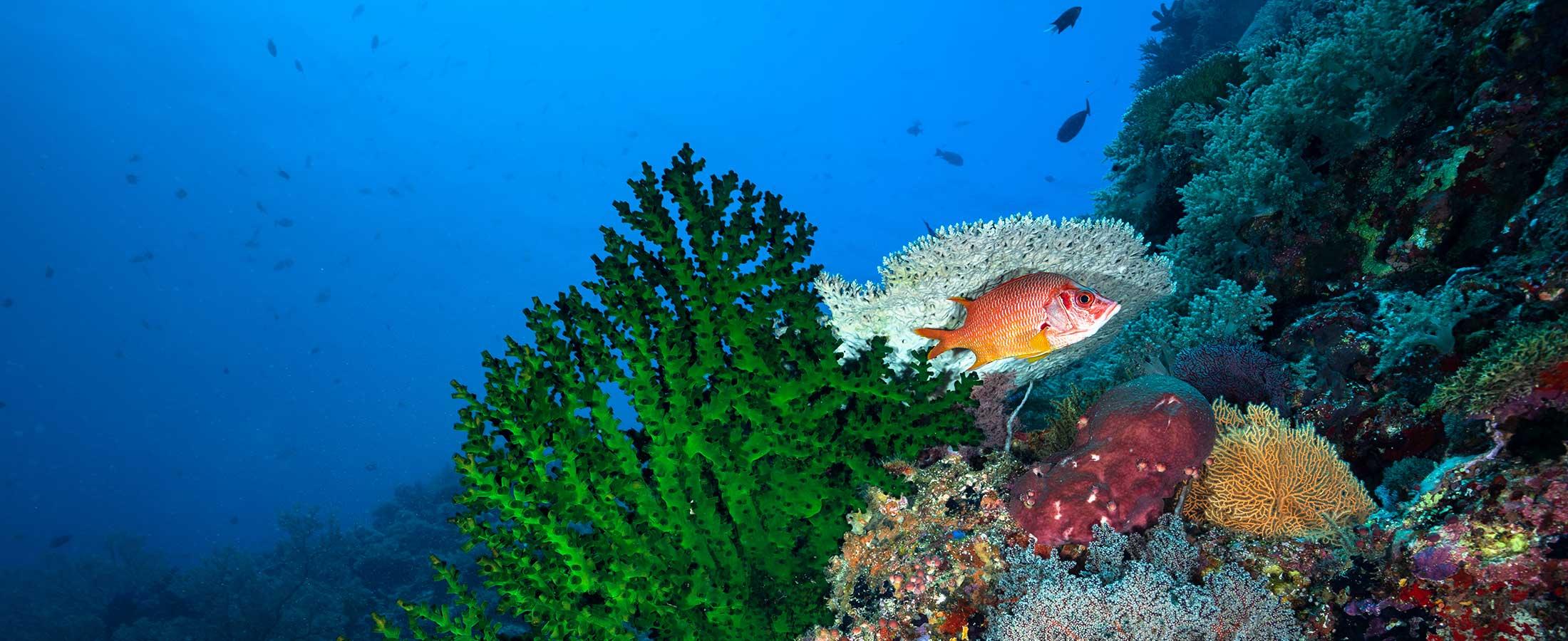 snapshot dive site